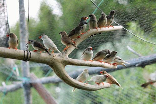 Bird & Aviary Netting